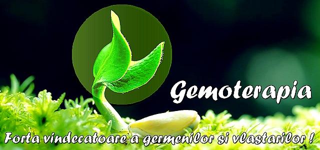 http://www.servimg.com/u/f18/19/17/38/41/gemote11.jpg