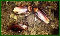 Тараканы прогрессируют.