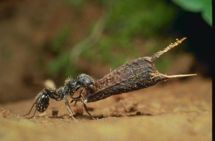 РАБОЧИЕ МУРАВЬИ отправляются далеко в лес и... Ну, а остальные муравьи...