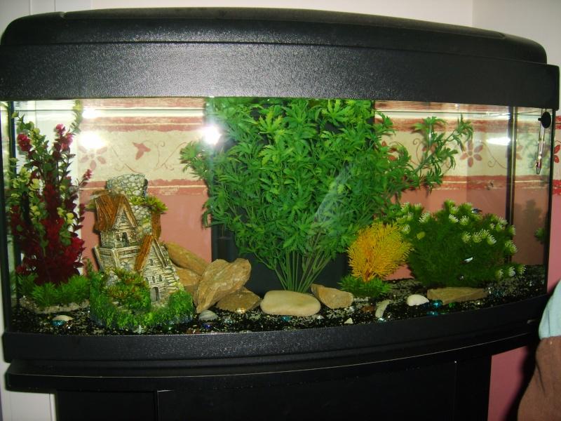 Pas de poissons avant de savoir ce qu il se passe au total for Nettoyeur aquarium poisson